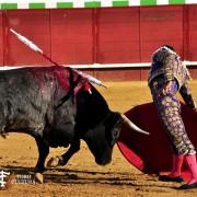 Por qué nos gustan los toros: neurociencia y tauromaquia