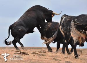 Toro de Los Millares (Espantalobos)