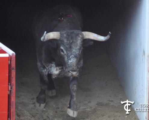 Toro de Miura