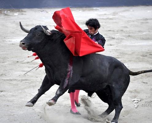 toro ganadería cuadri