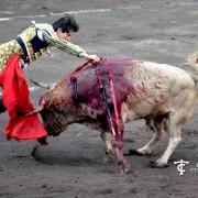 toro de Jandilla